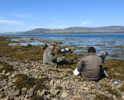 Photographing Ospreys and Seals